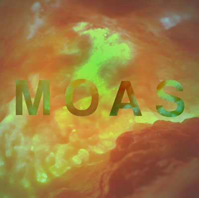 the-moas-the-moas-artwork