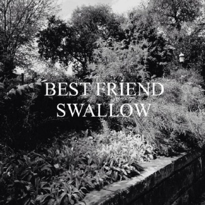 best-friend-swallow-artwork