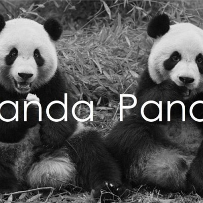 panda-panda-what-are-you-waiting-for